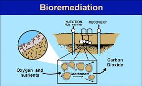 Apa Sich Peranan Bakteri Pada Pengendalian Pencemaran Lingkungan