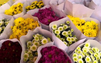 Harumnya Berbisnis Bunga Potong dan Bunga Papan