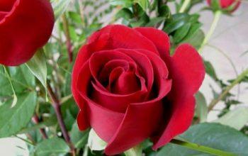 Filosofi Yang Ada Dalam Berbagai Jenis Bunga