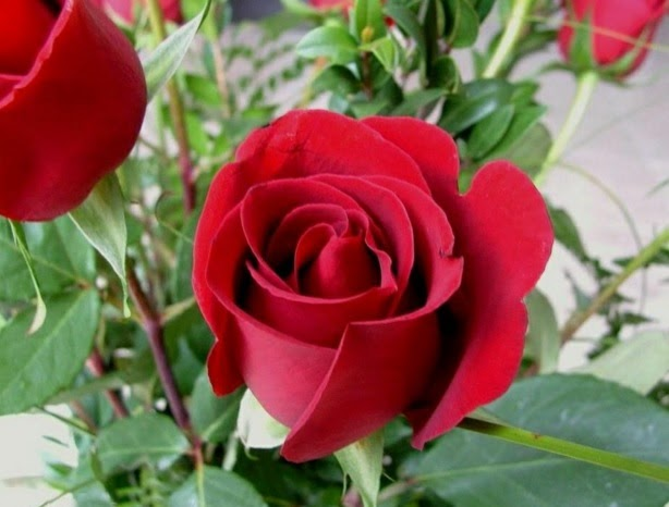 Jenis Bunga