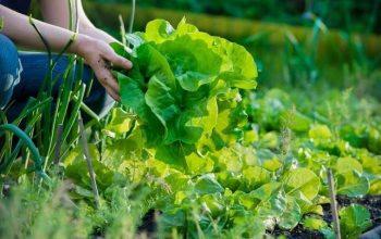 Rekomendasi Peluang Usaha Pertanian yang Menjanjikan untuk Pemula